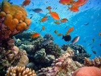 Descubriendo las maravillas del mar