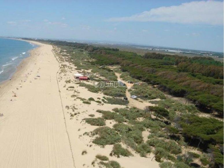 导师有经验塞维利亚美丽的海滩