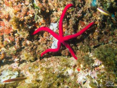 Escuela de Buceo El arrecife