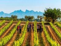 Conociendo las zonas vinicolas