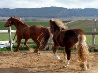 los caballos los llanos