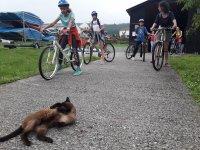 Ciclistas y gato