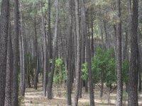 Tirolina en el Bosque