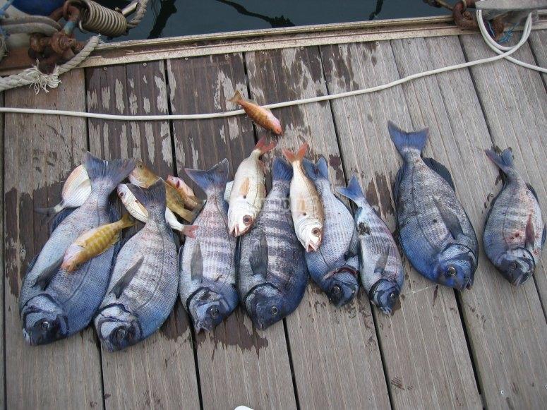在阿利坎特一个成功的钓鱼