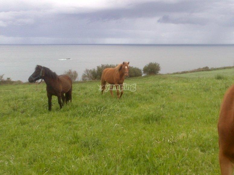 Caballos junto al mar