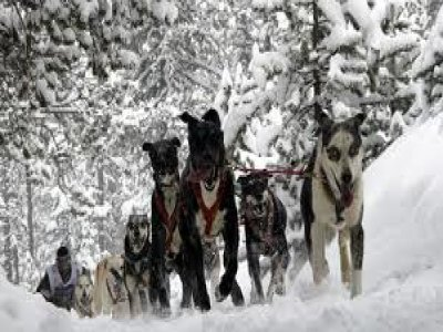 Cazaventuras Madrid Mushing