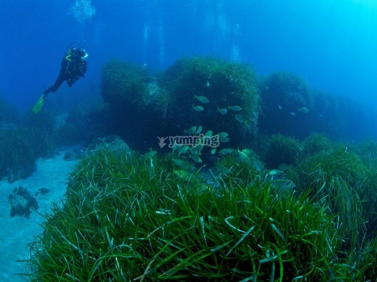 Scuba diving immersion in a tunnnel in Almería