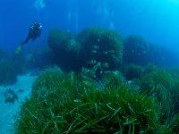 Fauna y vegetación marina en Cabo de Gata