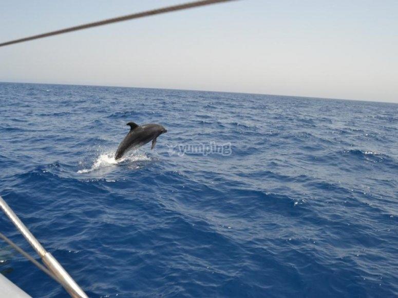 delfines en fuerteventura