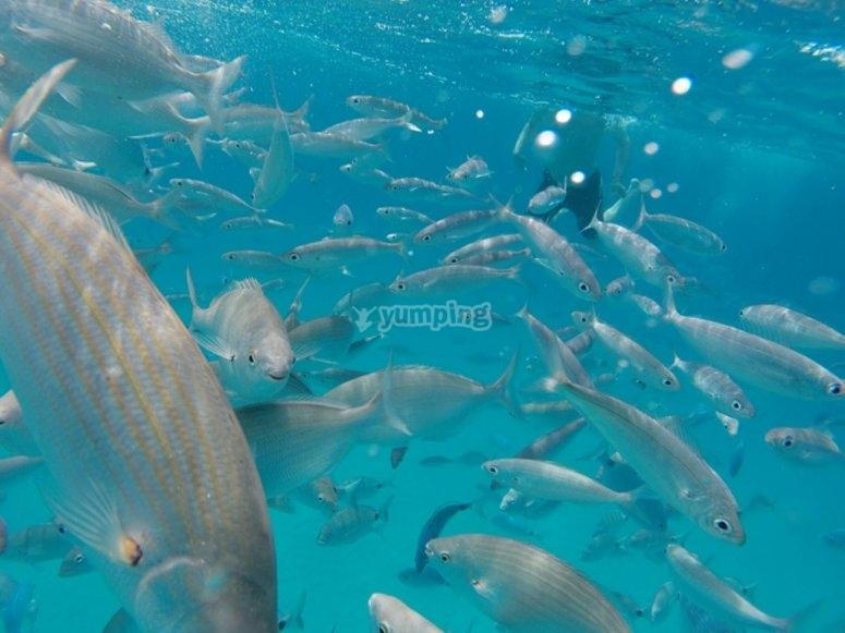 Snorkel en fuerteventura