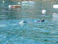 Buceo de superficie con equipo de snorkel