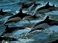Grupos de delfines