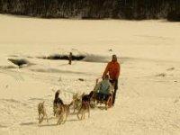 在雪雪橇犬回国