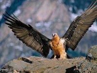 鹰与开放的翅膀