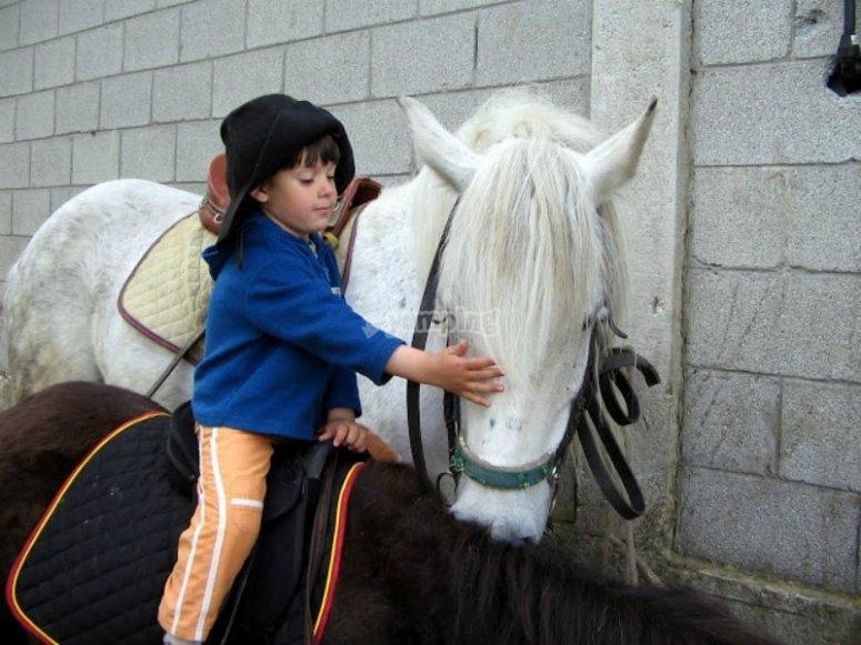 Enjoy our horses