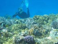 Apnea en fondos de coral