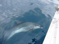 Avistamiento de cetáceos en Guipuzcoa
