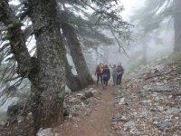 cuatro chicas caminando por la naturaleza con niebla