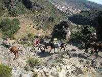 Paseos a caballo en la montaña