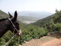 Mula en camino sobre el valle