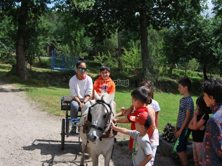 Carro de caballos en Negreira