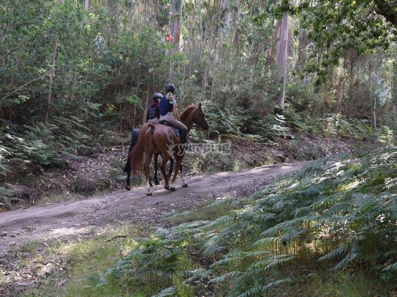 Walking the horse in Negreira