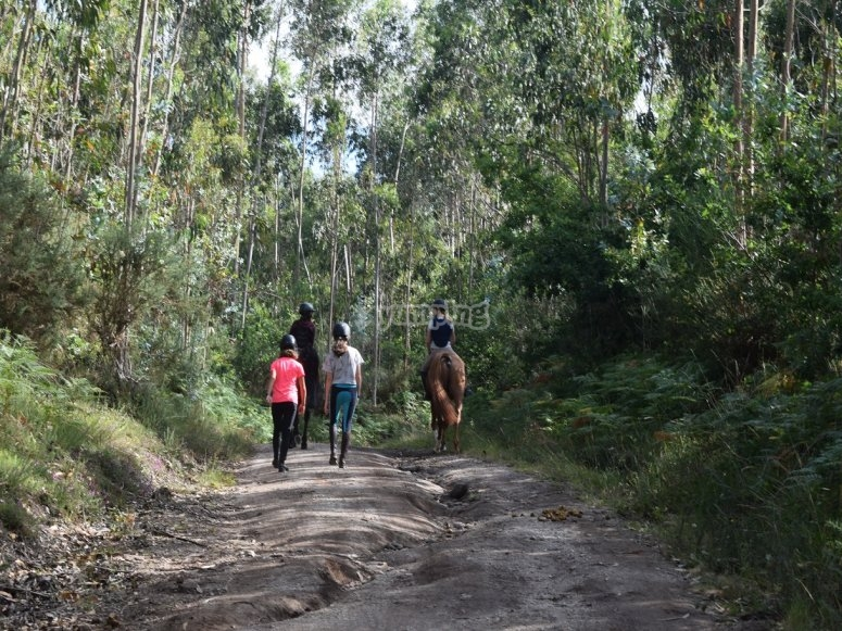 Through the trail by a horse of Negreira