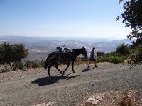 Expedicion con mula portando el equipaje