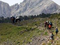 Expedicion con mulas