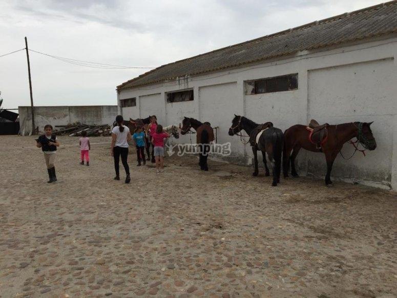 Hipica y caballos