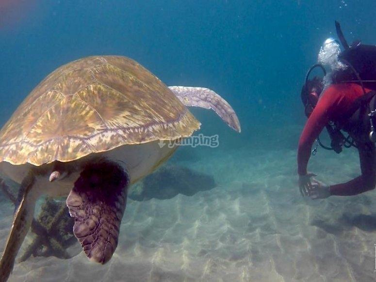 Con la compania de la tortuga