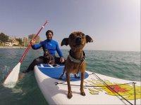 Paddle surf con los perretes