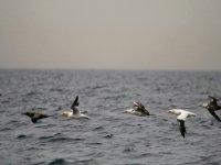 Avistamiento de aves en el mar