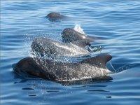 看海洋鲸类观鲸,逆戟鲸
