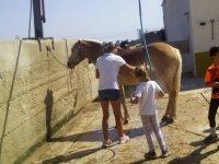 Aseando al caballo