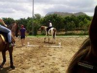 Peque游戏在赛道上的动物