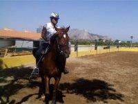 的Amazona与马