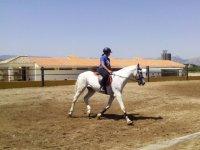 控制在赛道上的动物与白马