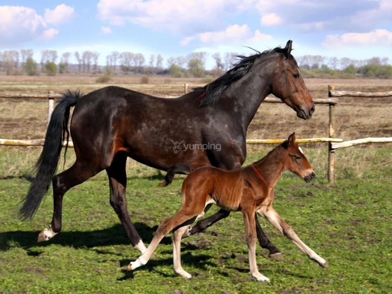 I cavalli sono gli animali più belli.jpg
