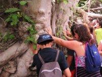 在游览期间指向触摸树干这棵树