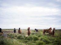 Conociendo la naturaleza con los caballos