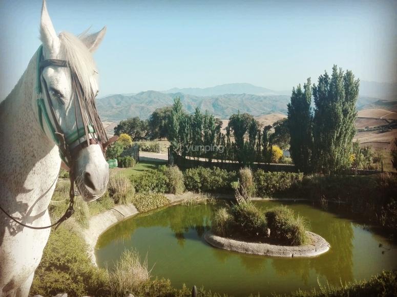 Disfrutas de las vistas del Torcal de Antequera a caballo
