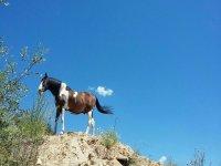 Uno de nuestros magicos caballos