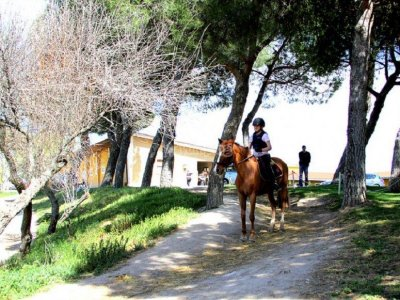 Horse riding camp at Madrid, 5 day + lunch