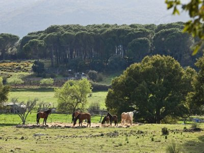 Horse ride in Grazalema+accommodation