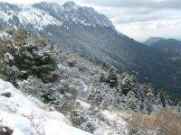格拉萨莱马Pinsapo内华达菌群在崎岖的景观