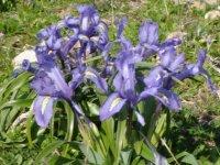 La flora de Grazalema