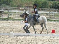 Juegos y clases de equitación