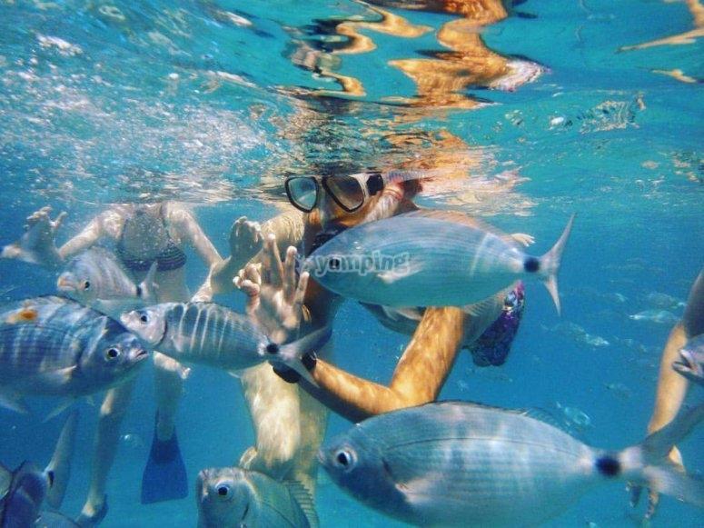 Snorkeling among fish