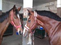 我们的两匹马